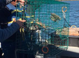 Students pulling up crab pots.