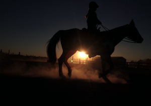 MEGAN GOIN A horse gallops along a ring in the sunset.